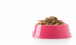 Koty: zamiast karmy z supermarketu