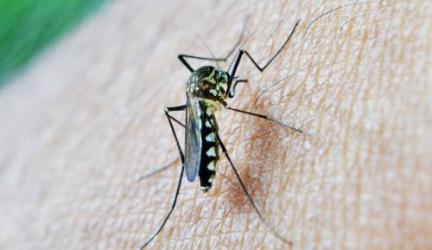 Spraye na komary
